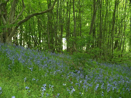 The woods in springtime, a beautiful place to go